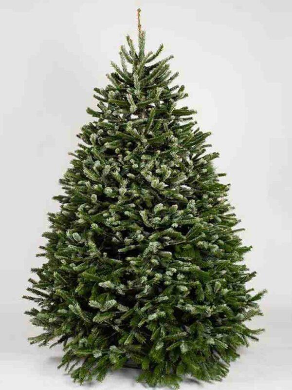 A green fresh Christmas tree